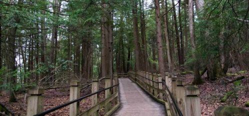 Inn at Deep Creek walking bridge through the forest