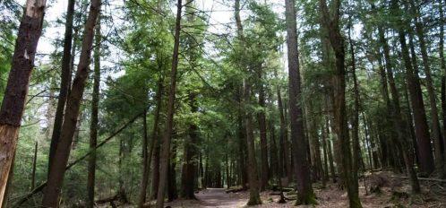 Inn at Deep Creek walking path through the forest