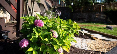 Inn at Deep Creek first level garden hydrangea closeup